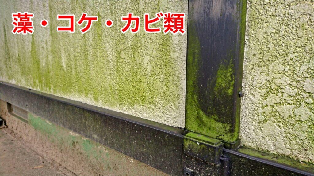 外壁に付いた藻・コケ・カビの画像